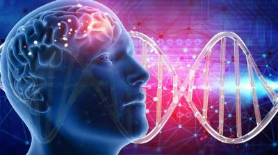 Researchers identify over 500 genes related to intelligence