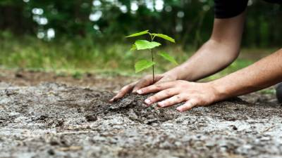 Trees being planted in D.I.Khan to tackle challenges of climate change: Nazar