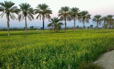 Steps taken for agriculture sector uplift in Balochistan