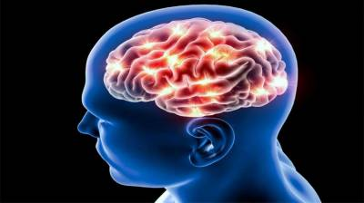 Brain structure potentially lined with person's risk-taking tendency