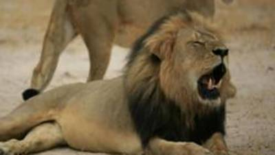 11 lions poisoned to death in Queen Elizabeth National Park
