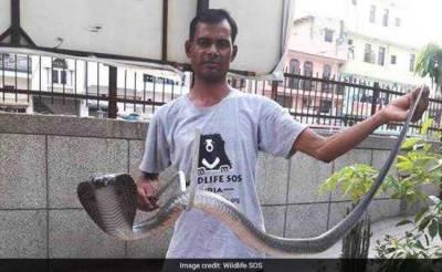 It's Cobras Rain in New Delhi