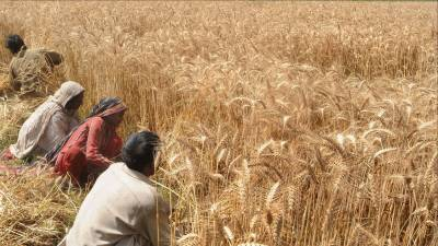 China out with a unique solution for Pakistan's depleting agriculture economy