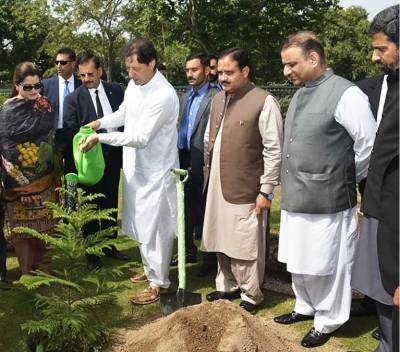 PM to formally launch '10 billion tree Tsunami'