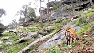 KP CM takes notice of illegal cutting of forests in Swat