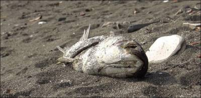 Large number of dead fish discovered at Karachi beach