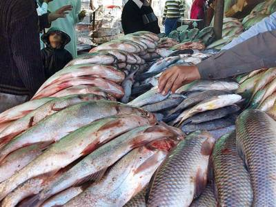 Gwadar needs fisheries processing center to increase sea-food exports