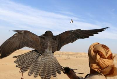 Pakistan to export 150 Falcons for UAE Vice President