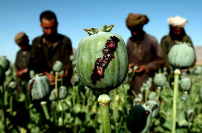 Religious scholars in Afghanistan issue fatwa against drugs
