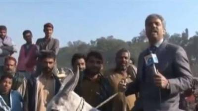 Geo TV Amin Hafeez hilarious reporting on Donkey breaking the Internet