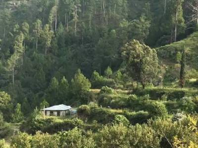 Pakistan on way to become one of the fastest green country of the World