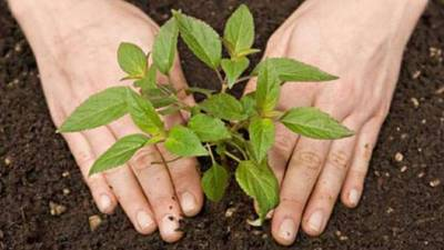 Finance Minister launches spring tree plantation campaign in Islamabad today