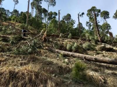 Pakistan lodges formal complaint to UN over forest damage by Indian air strike
