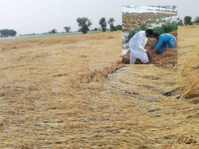 Govt to announce soon special relief package to farmers affected by rains