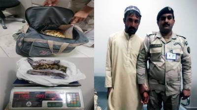 ANF foils bid to smuggle narcotics abroad from Islamabad International Airport