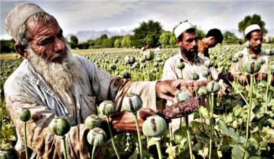 Opium production in Afghanistan increased multifold under US invasion
