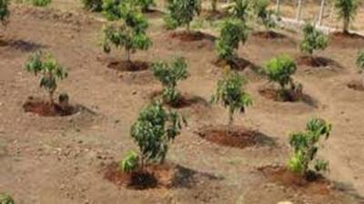 Maximum trees to be planted in KP to tackle climate changes