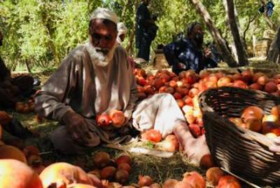 Pakistan responds over Afghan media reports of taxes increase against Afghan export goods
