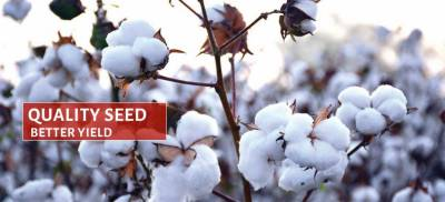 Punjab Seed Council approved 25 new seed variants