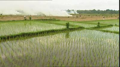 Punjab government launches an unprecedented agriculture program across the province