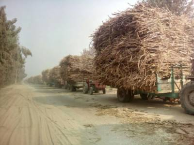 Over 55,000 hidden Sugar Sacks Recovered from Ittefaq Sugar Mills owned by Sharif family