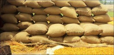 PTI government sets new wheat support price for the season 2020