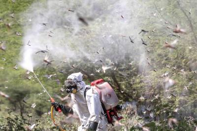 Over 4,500 hectares of area sprayed to control locust in parts of country during last 24 hours