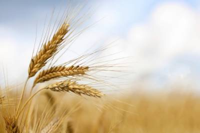 Govt decides to abolish duties on wheat import; lift ban on inter-provincial movement