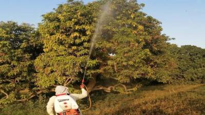 Anti-locust operation continuing in districts affected by crop munching pests