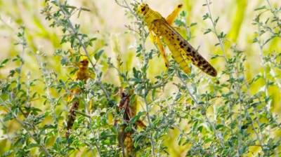 Chinese company offers to manufacture drones for protection of crops, control locust in Pakistan
