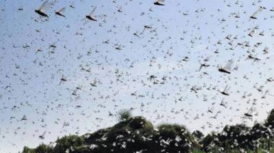 Survey, spray operations underway to control locust countrywide: NDMA