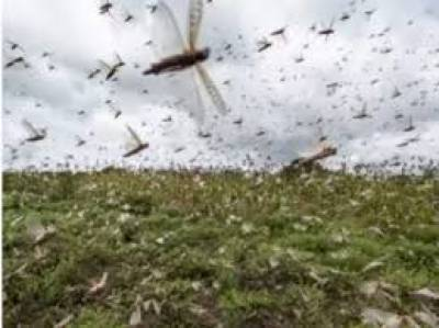 Anti-locust operation completed over over 2.75 million acres : NLCC