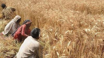 "Punjab cabinet to decide on ""early release"" of wheat to mills"