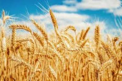 Millers for equal distribution of wheat quota across Punjab