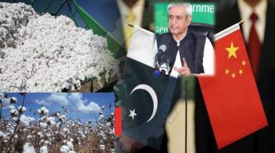 Govt working on Chinese Seed Technology for yield-enhancing: Fakhar Imam