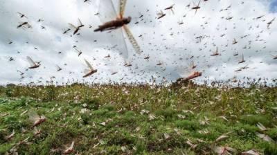 Pakistan calls for international cooperation to combat locusts July 10, 2020