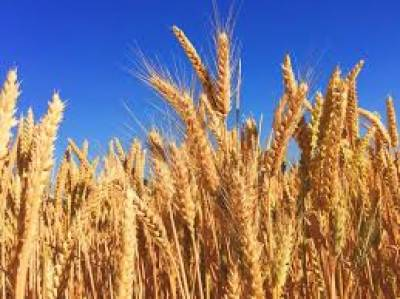 Wheat import permits issued to 288 private sector importers: Commissioner ,.July 20, 2020