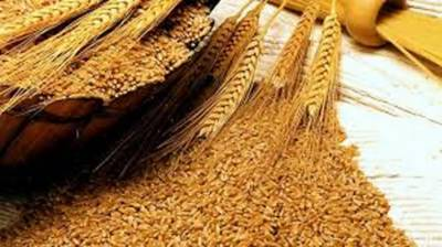 Sindh Govt urged to announce wheat release policy 2020-21 July 22, 2020