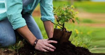 Latest technology being utilized in country for tree plantation drive August 10, 2020