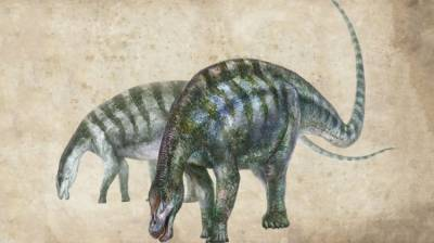 New dinosaur species fossil discovered in east China August 17, 2020