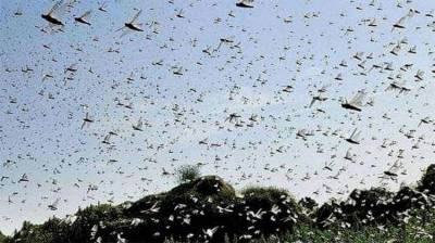 NLCC conducts anti-pest survey over 218,827 hectares August 28, 2020