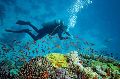 Pakistan government to turn Charna Island into a national marine park