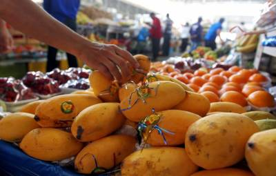 Good news for the Pakistani mangoes from the international market
